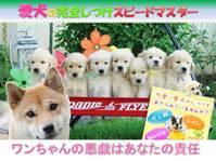 ■■愛犬の完全しつけスピードマスターマニュアル大公開!